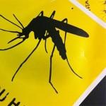 dengue-in-san-pedro